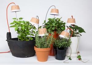 Cynara, uno dei modelli di lampada Bulbo con tecnologia LED.