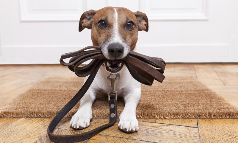 cerca dogsitter