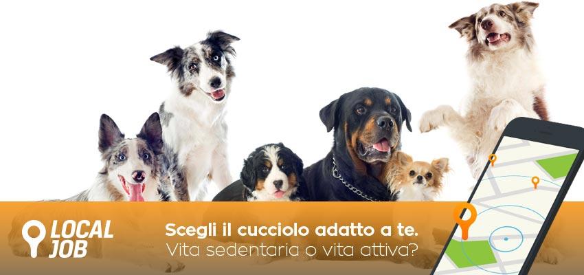 come-scegliere-cucciolo-cane-1.jpg