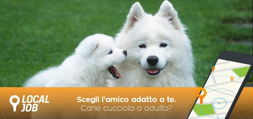 cane-cucciolo-o-adulto.jpg