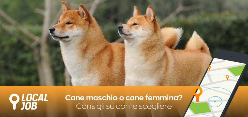cane-maschio-cane-femmina.png