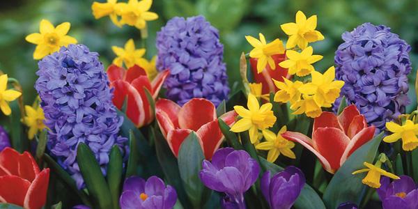 consigli giardinaggio fiori primavera