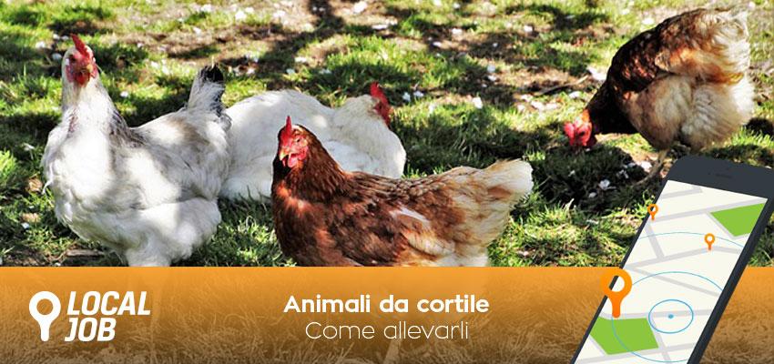 animali-da-cortile.jpg
