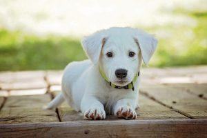 costruire cuccia per cane