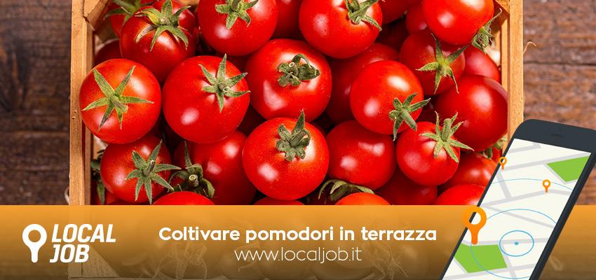 coltivare-pomodori-terrazza-localjob.jpg